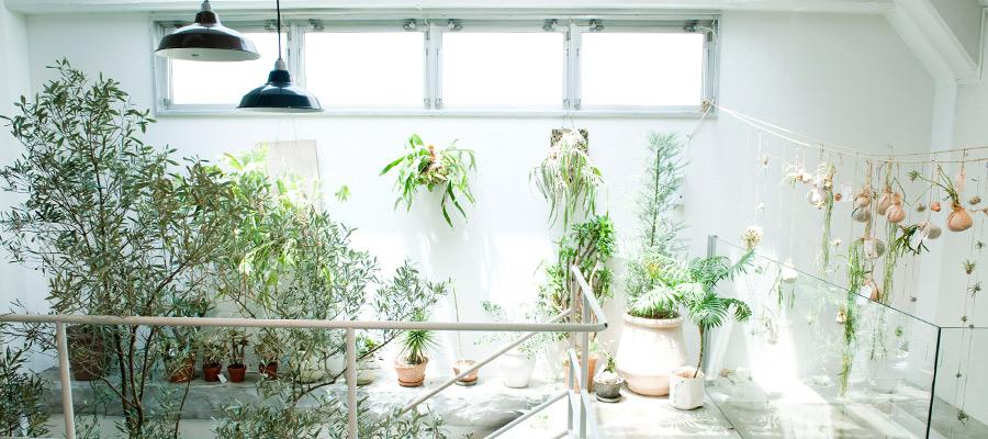 新感覚のライフスタイルショップ『TODAY'S SPECIAL』 - 2 - 香りと植物のある暮らし