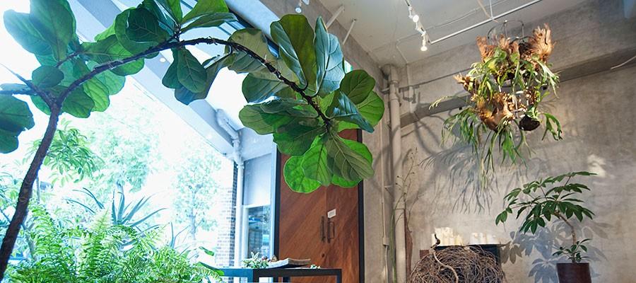 indoor green -1-緑は空間をつくる最高のインテリア