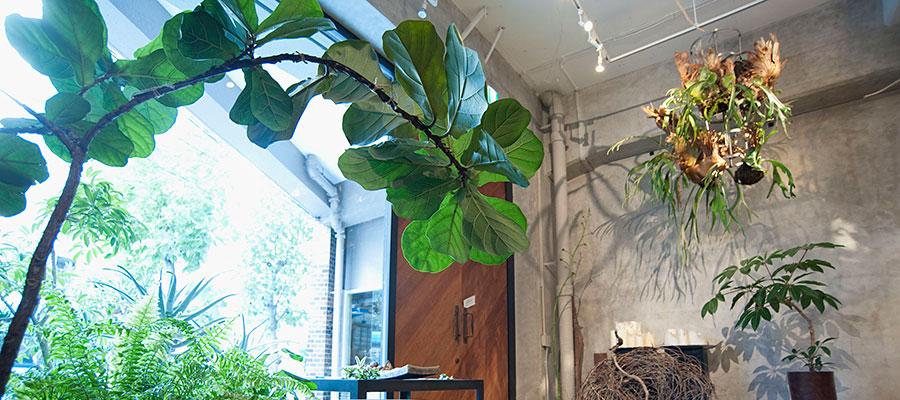 indoor green-1-〜緑は空間をつくる 最高のインテリア
