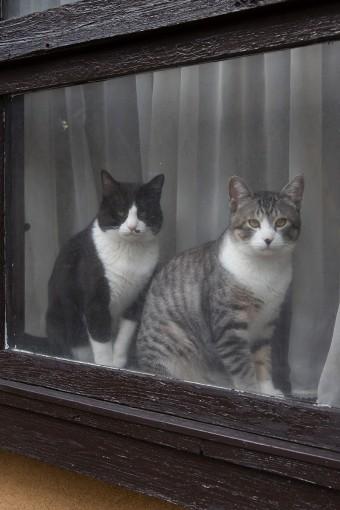 愛猫のコハダ(右)とウニ(左)が、土間の出窓でお見送り。1歳の男の子兄弟。