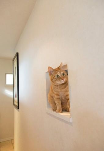 玄関入ってすぐの猫窓では、愛猫ぼらぼら君がお出迎え。
