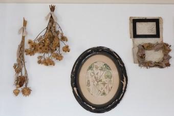 アンティークの額縁に、植物図鑑の1ページを飾る。
