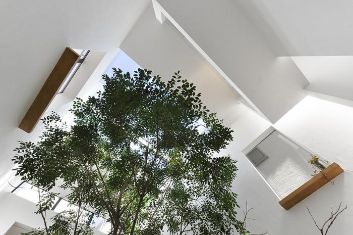 見上げると、一層、ヴォリュームを感じる枝ぶり。心地よい木陰を提供する。夫の央さんは休日に、このシマトネリコの木陰で昼寝することもあるという。家の中での木陰のまどろみ――普通では考えられない贅沢だ。