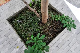 シマトネリコの脚もとには、水やりのための蛇口がある。
