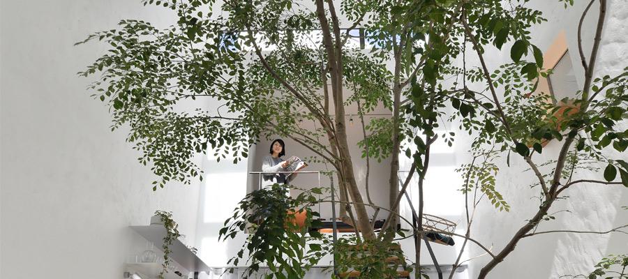 """木とともに暮らす 屋内で自然を感じる """"広場""""のある家"""