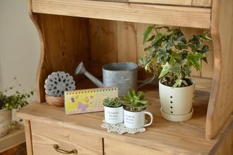 多肉植物なども取り入れ、カフェ風にディスプレイ。
