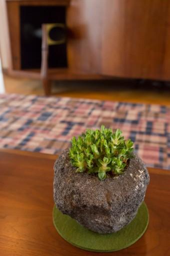 火山岩に植えられた多肉植物。「実は一度も水をあげたことがないんですが、この場所でちゃんと育ってます」