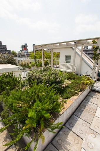 心地よい屋上ガーデン。緑化に積極的な区の制度を利用して工事代金の3割を助成してもらった。土の断熱効果は思ったより高い。