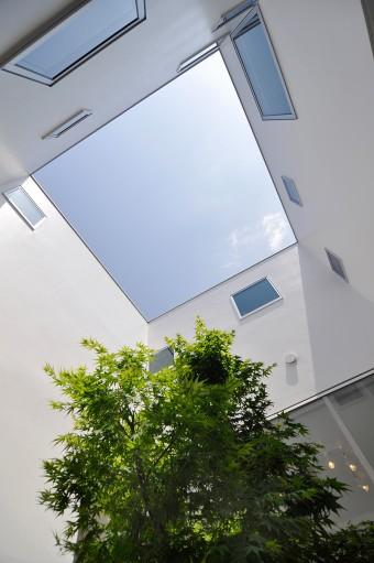 中庭から見上げる。この家のシンボルツリーは、モミジ。白い壁面に囲まれたスペースに緑が映える。