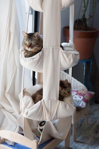 ひとみ、かぶき、かすみ、ジョゼフィーヌの4匹の猫も幸せに暮らす。