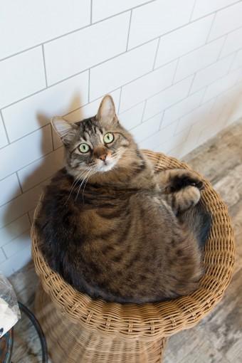 猫用のかごはIKEAで買ったもの。猫たちのお気に入り。