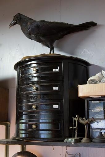 鳥類の剥製は作品にもく用いる。「かわいそうなので商品にしたかった」という。