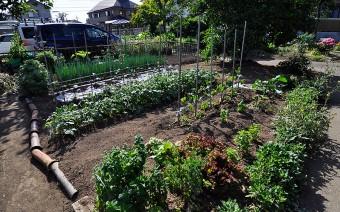 レタス、ミント、バジル、ブロッコリーなど、裏手にある畑で作った野菜は、パンにも使われる。