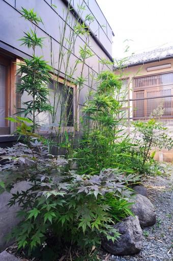 パン屋さんとの間のスペースに植えられたモミジ、竹と、奥にミョウガ。