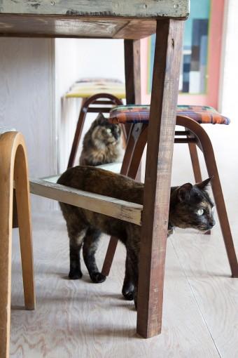 愛猫のキキ&ララ。キャットタワーも設置したばかり。