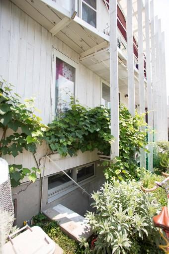 半地下に降りる階段にはぶどう棚が。白い外壁に、グリーンが映えて美しい。