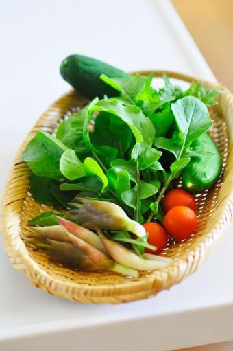 この日の朝に収穫した野菜。シソやミョウガはもともとこの土地に自生していたものだそう。周囲の雑木林では山菜も採れる。