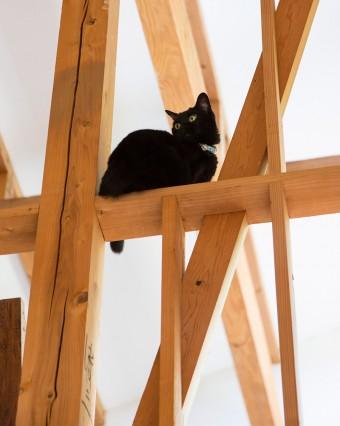 2階の吹き抜けの手すりにひらりと飛び乗った12歳の黒猫のピッチちゃん。人間たちを高見の見物。