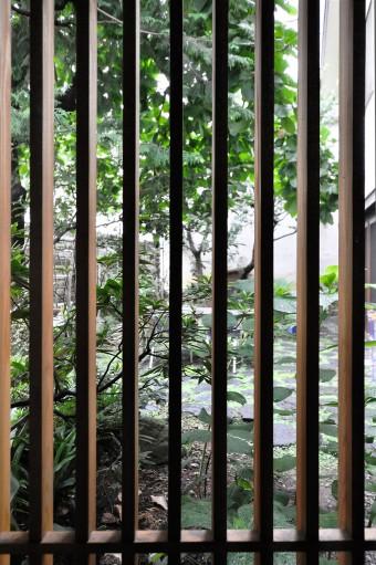 和室の格子窓から庭を見る。「格子越しに見える庭の感じもすごいいい」と青沼さん。