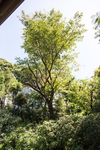 裏山につながる、緑豊かな庭。春は山桜、秋はモミジなど、家に居ながらにして鑑賞できる。