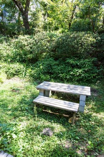 リゾート地にいるかのような豊かな緑が心地よい。ベンチ手前の穴は、多分モグラが掘ったものだとか。