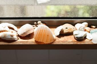 キッチンの窓辺に飾られた貝殻。秋谷の海に潜ると、イワシやエイなどの魚や貝など、生き物がたくさん見られるそうだ。