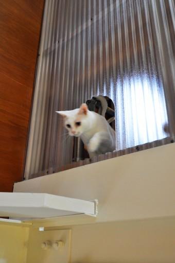 """2階間仕切りに設けられた""""猫穴""""から階段室へ移動中。"""