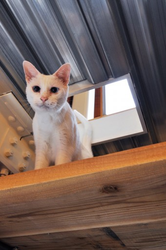 """2階天井に開けられた""""猫穴""""。"""