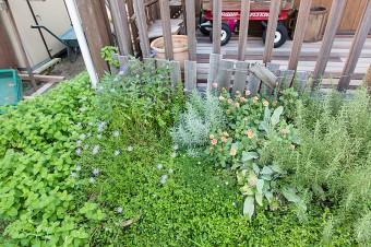 玄関前ではローズマリー、ミントなどを栽培。ラジオフライヤーは、夫の趣味で購入。