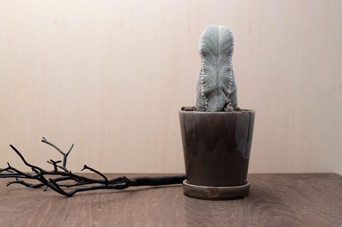サボテン(オンヅカ 四角ランポー玉) ¥21,000 黒フェイクナチュラブランチ ¥2,000 ともに AGITO 六本木