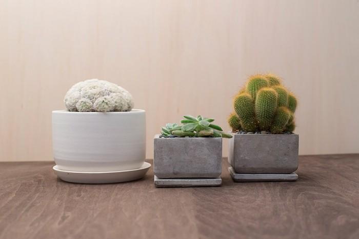 左からサボテン(マミラリア白星) ¥6,510 多肉植物(エケベリア) ¥2,415  サボテン(キンコウマル) ¥2,625 以上CIBONE Aoyama