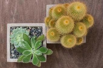 《ユニークなサボテン&多肉植物》
