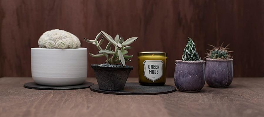 テーブルグリーン -1- 秋のテーブルにオススメ 個性派サボテン&多肉植物