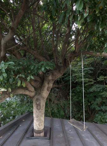 母屋の屋根の上まで樹が貫いているので、家そのものがツリーハウスのような赴き。少年気分で屋根の上のブランコ遊びも。