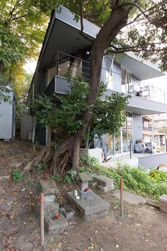 樹の根元には祠が2つ。「諏訪神社と那智権現のものだそうです。パワースポットでトレーニングし、風呂に入れる最高の場所です」
