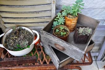 """玄関先も、植物を使って飾り付け。植物は、""""なるべく自分で育ってくれるものがいいですね"""""""