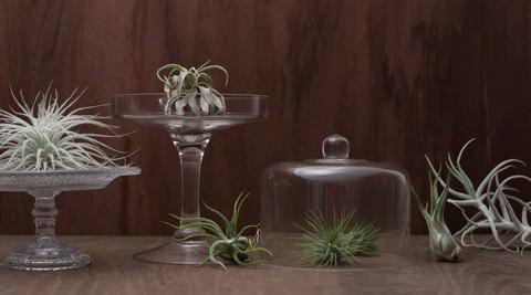 テーブルグリーン -2- ノスタルジックな秋のアレンジメント