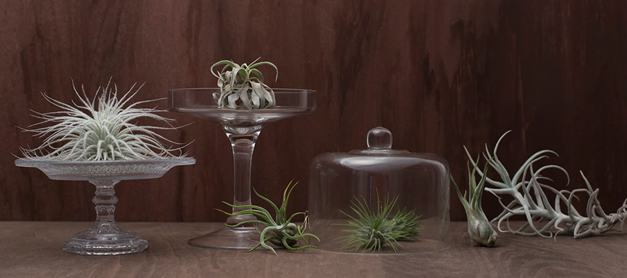 テーブルグリーン -2- ノスタルジックな 秋のアレンジメント