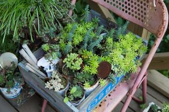 ガーデニングショップで購入した、鉢植えなどを育てる。錆びた椅子に多肉植物が似合う。