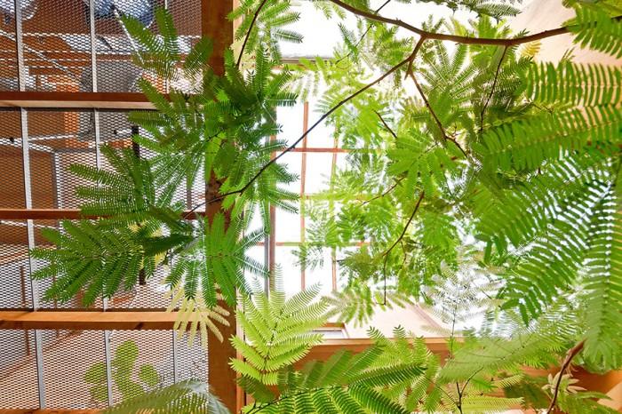 """1階から見上げると、まるで植物園。自然が好きで緑を入れたかったというお2人は半屋外的な""""敷地""""にこの木を植えた。「家に帰ってきて中に入るとすぐ木がぽっとあるというのは不思議な感じで、しかもすごく楽しい」と柴田さん。"""