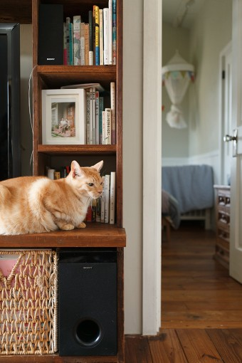 夫妻ともに編集者のため、家のあちこちに本がある。映っているのは、飼い猫のウタマロ。
