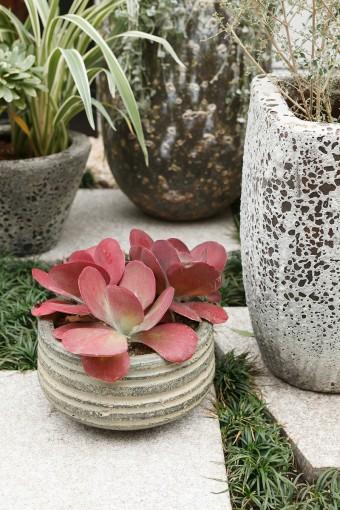 日本庭園を意識した植栽。