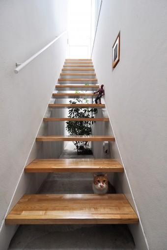 """階段の間からこちらをうかがうのは福ちゃん。洋子さんは階段越しに植栽が見えるのがこの家のお気に入りの""""絵""""のひとつという。"""