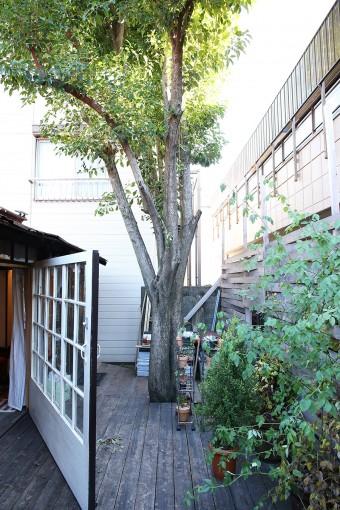 ドアを半分開けた状態。大きな木が、家を守ってくれているようだ。ウッドデッキとウッドフェンスも、すべて健さんのDIY。