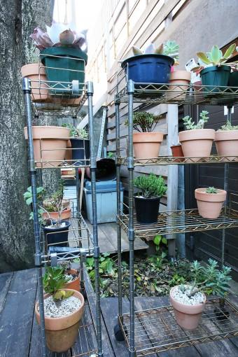健さんの趣味が多肉植物を育てること。デッキや広縁にたくさんの鉢植えが置かれていた。