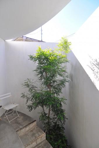 保坂邸のシンボルツリーはシマトネリコ。
