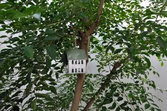 シマトネリコに吊るされているのはデンマークで買って来たキャンドルホルダー。