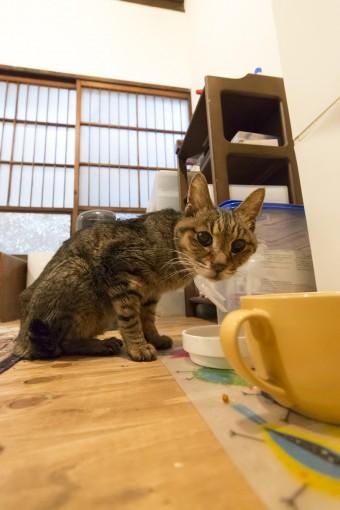 サノさんの愛猫は17歳。猫と暮らせることも、この家に住むことの喜びのひとつだという。