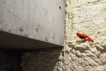 発泡ウレタンで偶然できた壁の突出部に鳥がとまる。