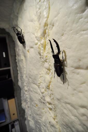 地下のいちばんの奥に位置する加藤さんの仕事スペースの壁にはクワガタが留められている。